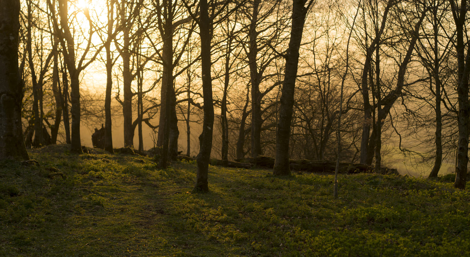sunset_trees_chanctonbury