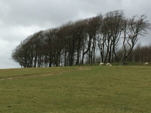 Chanctonbury Ring, the location for this years Celtic Easter gathering