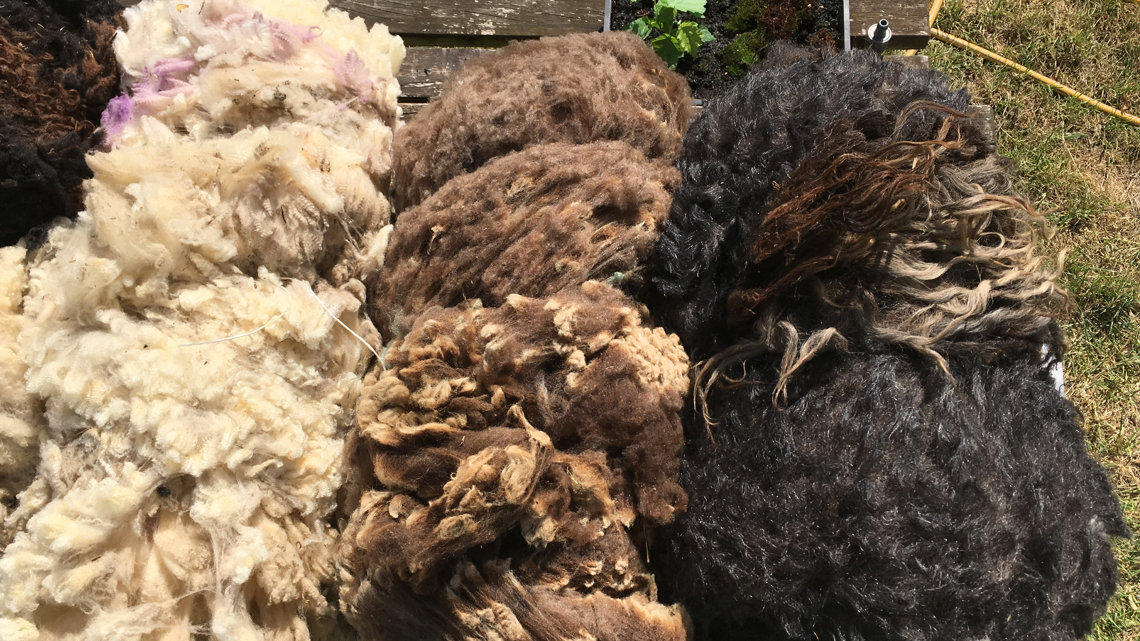St Columba Sheep Fleeces,an amazing variety of natural fibre and colour.