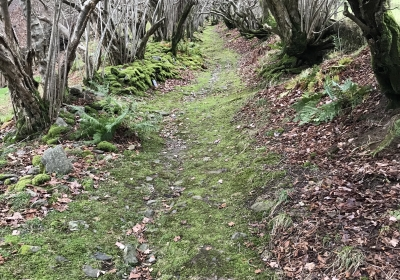 Ancient Drovers Way at Pennant St Melangell
